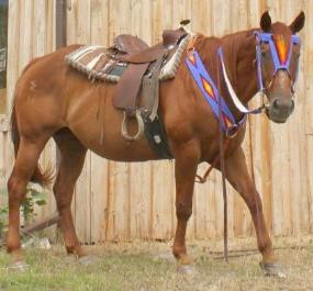 Singing Horse Trading Post